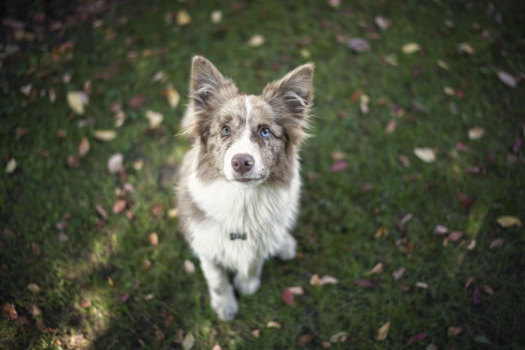 aufmerksamer Hund hört zu