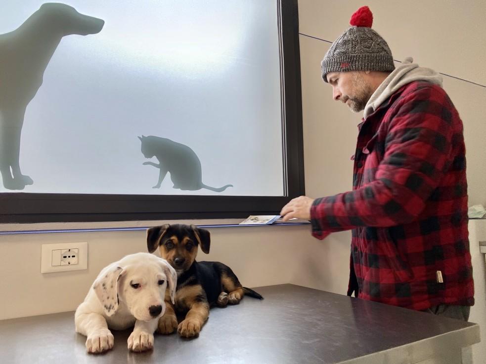 Beim Tierarzt geht man automatisch einen Behandlungsvertrag ein