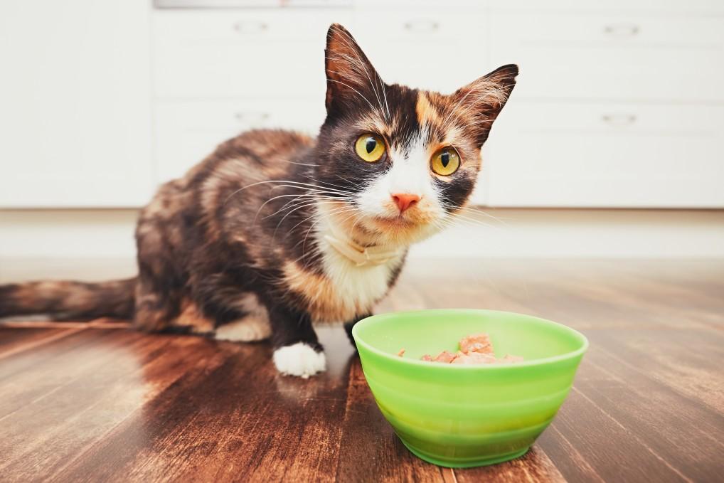 Fütterung einer Katze