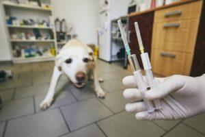 Hund bekommt Impfauffrischung gegen Würmer