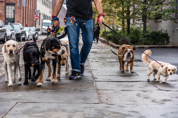 Hundesitter mit Hunden an der Leine