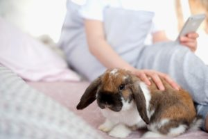 Kaninchen mit Myxomatose