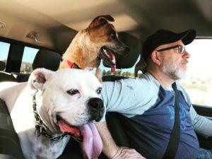 Manche Hunde haben schnell ein Fibrom