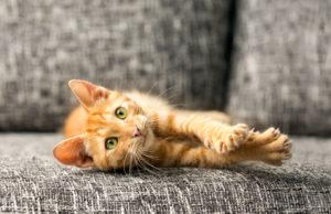 Die Körpersprache der Katzen und was sie bedeutet.
