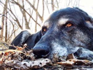 Hunde Senior macht eine Pause