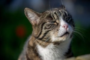 Katze mit Schluckauf
