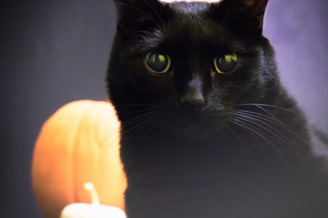 Katze mit grauem Star