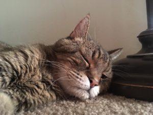 ältere Katze mit Rheuma