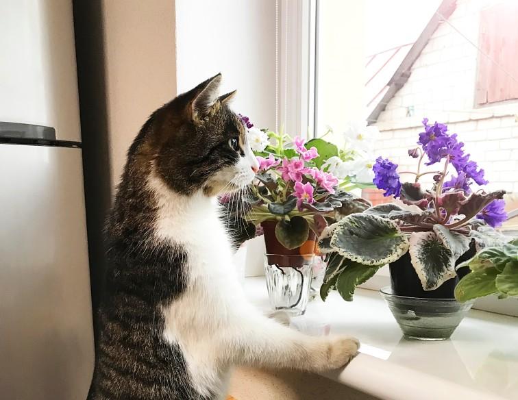 einige Pflanzen sind für Katzen giftig