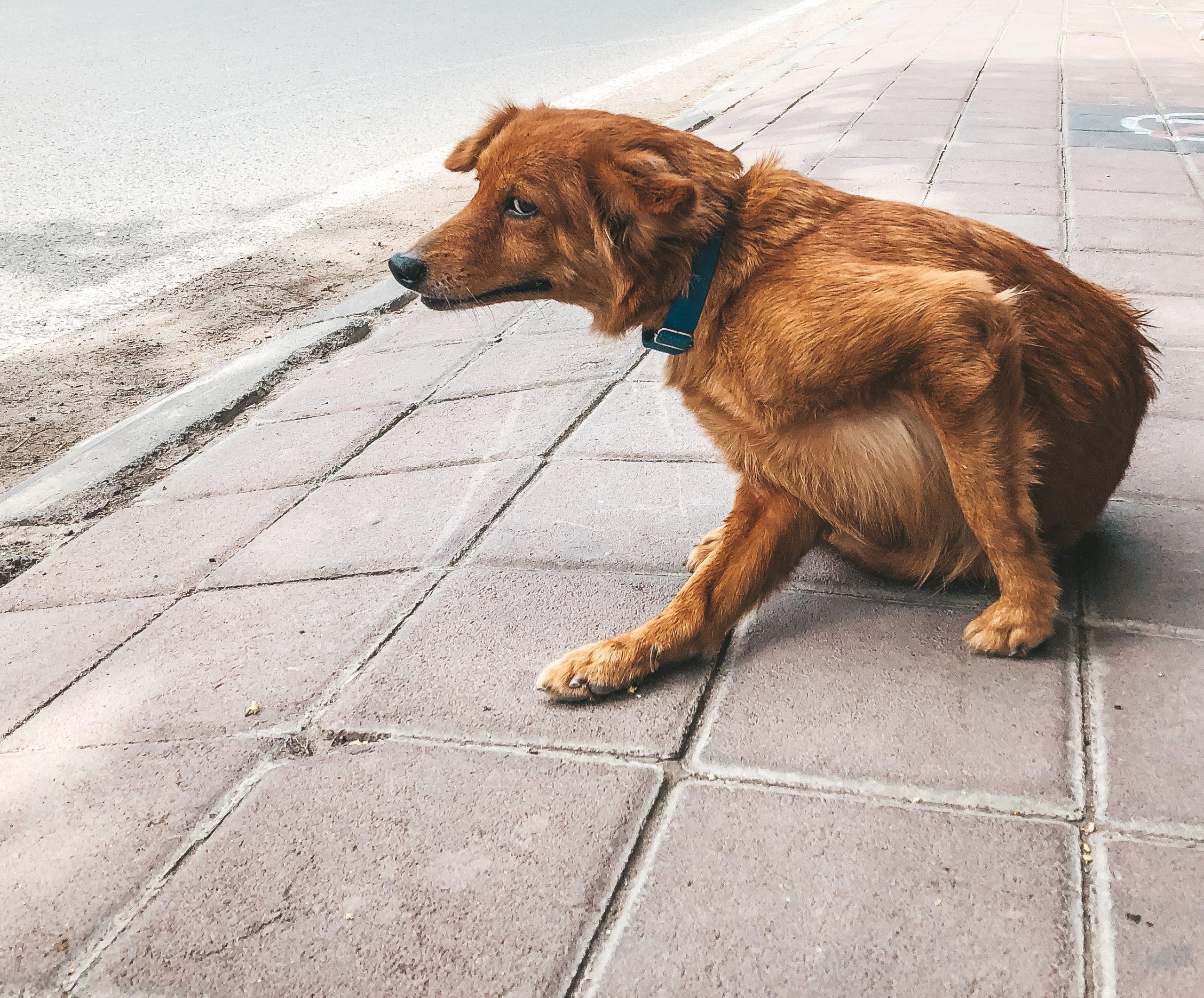 Sobald sich ein Hund kratzt, kann das unterschiedliche Ursachen haben.