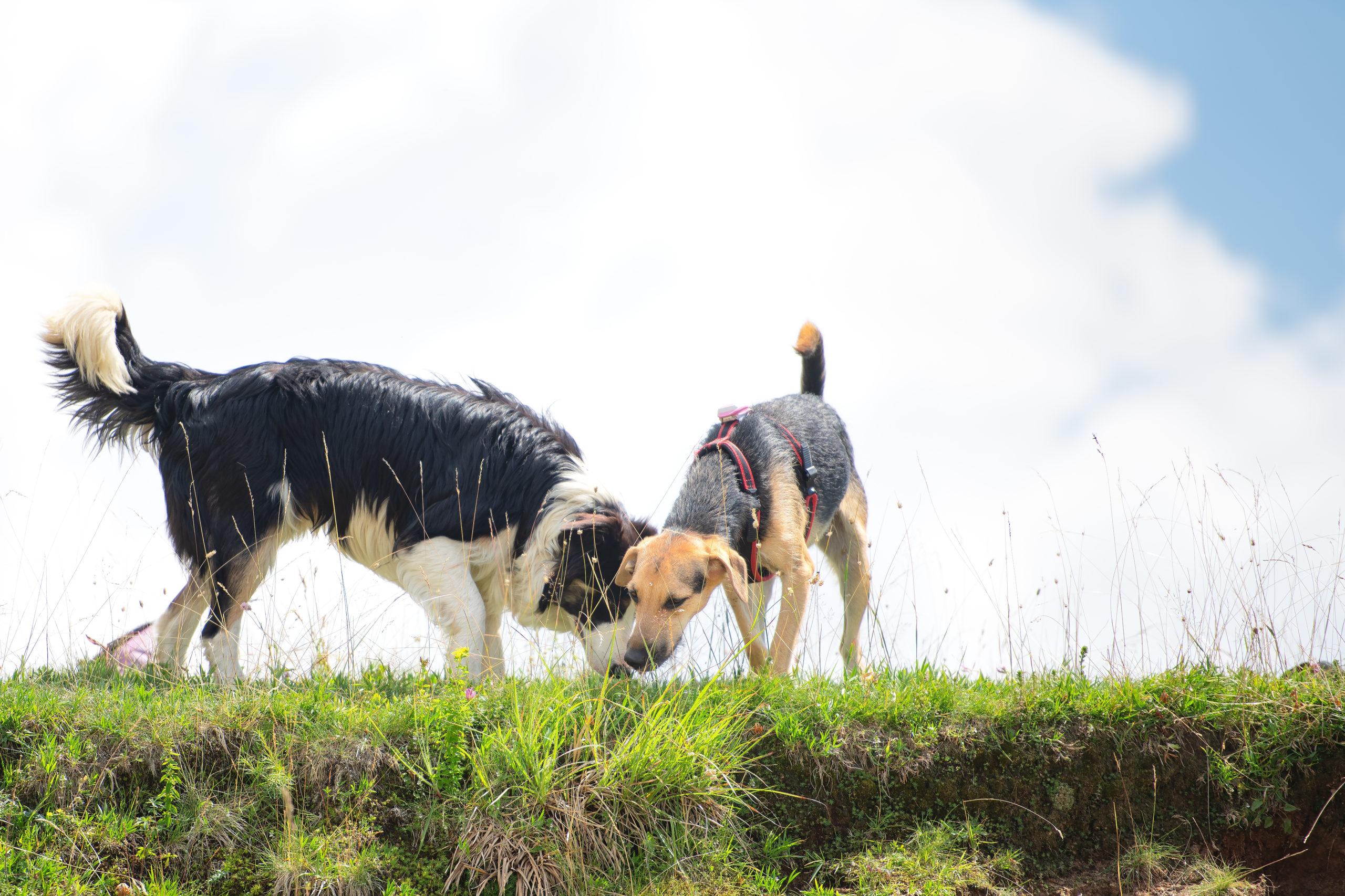CBD Öl kann auch auf Hunde eine beruhigende Wirkung haben.