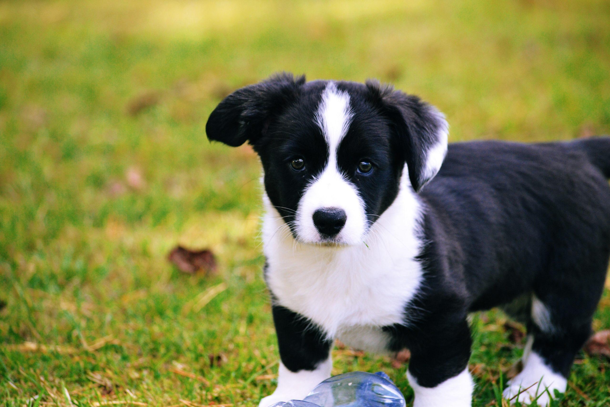 Junge Hunde neigen zum Beißen. So kann man Ihnen das abgewöhnen.