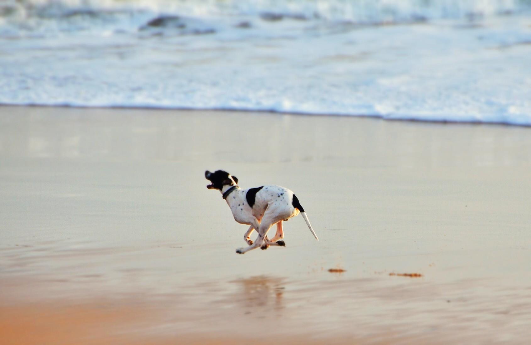 Urlaub in Dänemark – ein riesiges Vergnügen für jeden Hund. Foto: joao.soares.315 via Twenty20
